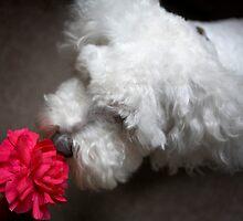 Monty & The Pink Flower by Debbie Rowe