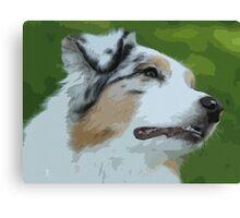 Australian shepherd pretty dog breed Canvas Print