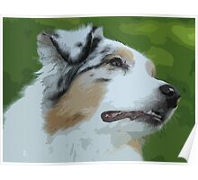 Australian shepherd pretty dog breed Poster
