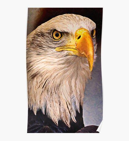 American Bald eagle Poster