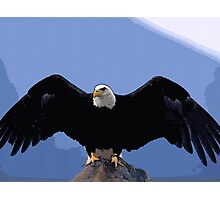 bald eagle wingspan Photographic Print