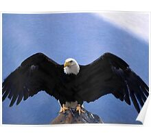 Bald eagle wingspan  Poster