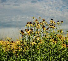 Sunlight On The Susan's by TravisMcGuire