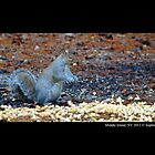 Sciurus Carolinensis - Eastern Gray Squirrel Eating Peanuts  by © Sophie W. Smith