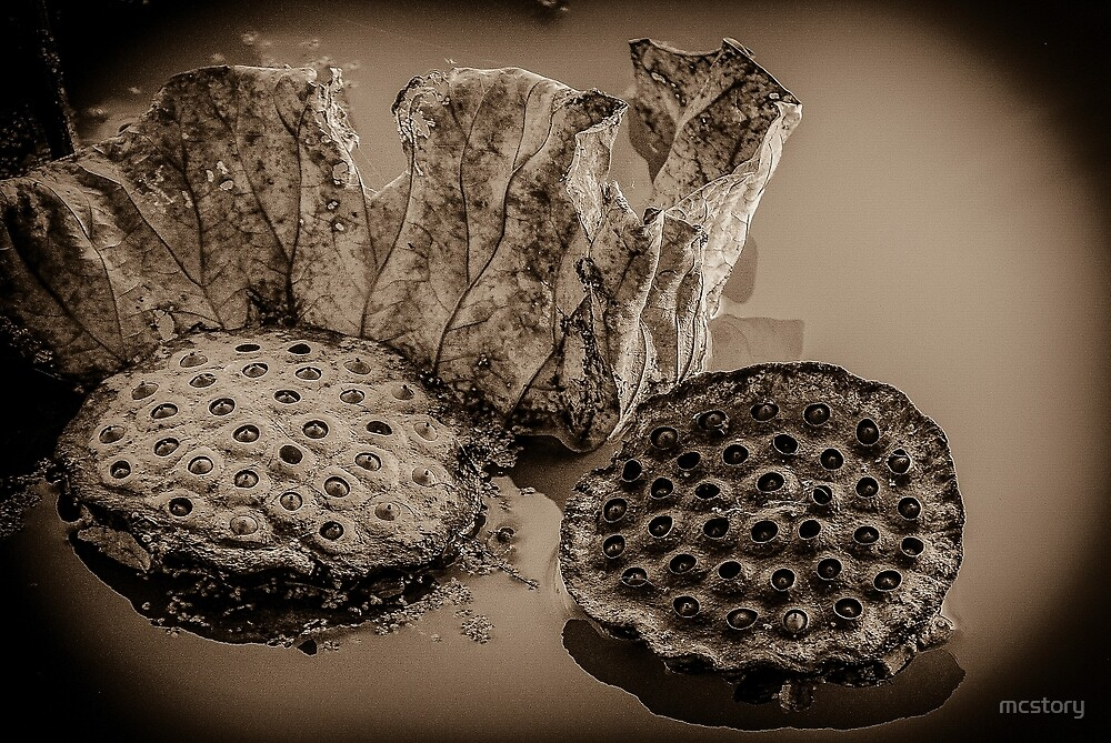 Floating Lotus Seed Pods1 by Mary Carol Story
