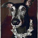 Galgo Gilbert wishes Happy Christmas! by homesick