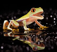 Laughing frog by Angi Wallace
