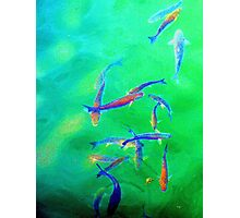 Psychedelic Fish - padstow Photographic Print