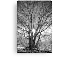 Winter Spread Canvas Print