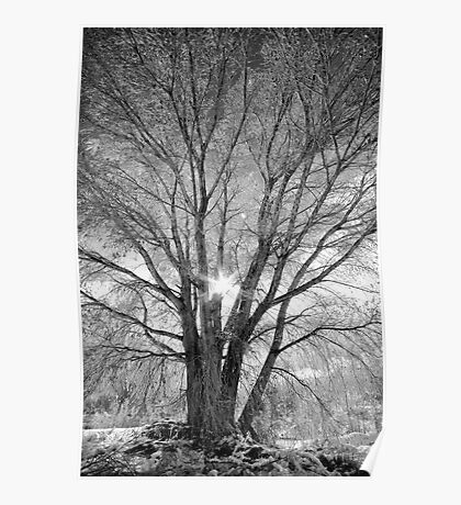 Winter Spread Poster