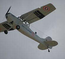 Cessna Bird Dog @ Temora Airshow 2008 by muz2142