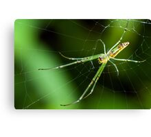Spinning Web Canvas Print