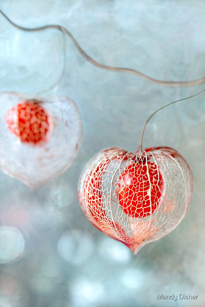 Winter decs by Mandy Disher