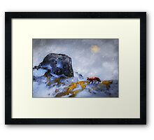 Foraging Fox Framed Print