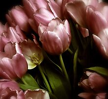 Twilight Tulips by Jessica Jenney