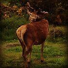 Deer by LKPhoto