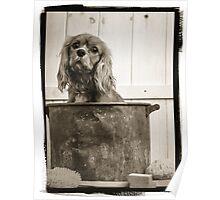Vintage Dog Bath Poster