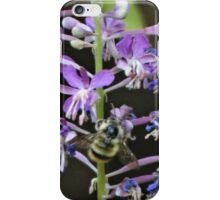 Bee on bloom iPhone Case/Skin
