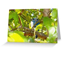 Stout young blue jay Greeting Card