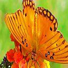 Orange Butterfly iPad Case by ipadjohn
