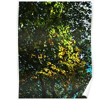 Sun setting on leaves Poster