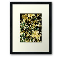 Piebald Holly Framed Print