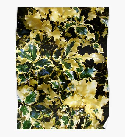 Piebald Holly Poster