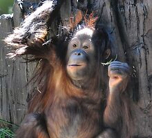 Baby Orangutan by venny