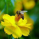 Little Bee iPad Case by ipadjohn
