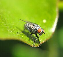 Fly guy by tabusoro