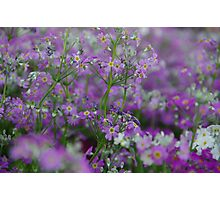 Purple Bunches of Happiness Photographic Print