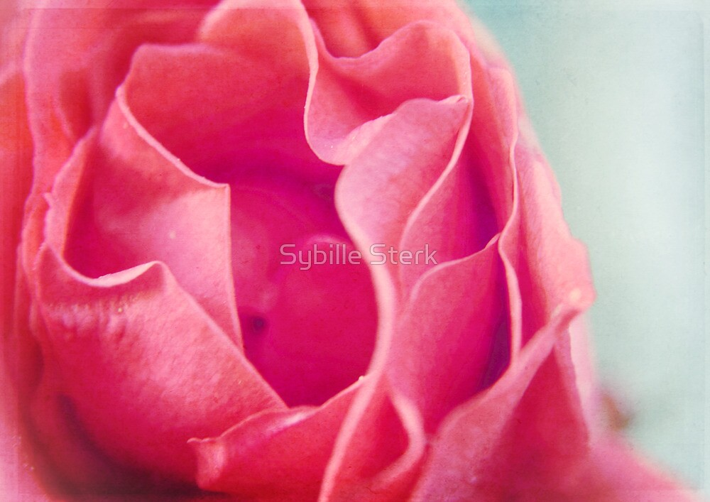 A Rose is a Rose is a Rose by Sybille Sterk
