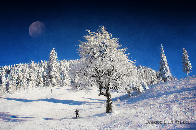 Winter Day by Dragos Dumitrascu