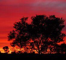 Winter Sunset by Leslie-Ann