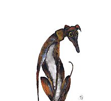 GREYHOUND Photographic Print