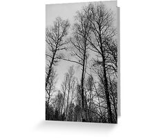 Sky reaching! Greeting Card