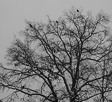 December crows, The tree of life by PierPhotography