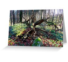 Amazing Nature Greeting Card