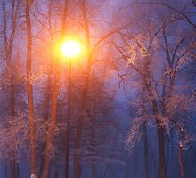 Morning Frost by Bendinglife