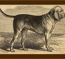 Bloodhound General Greeting Card by Yesteryears