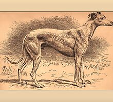 Greyhound Greetings by Yesteryears