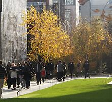 Late Autumn Colors and Foliage, High Line, New York City's Elevated Garden and Park by lenspiro