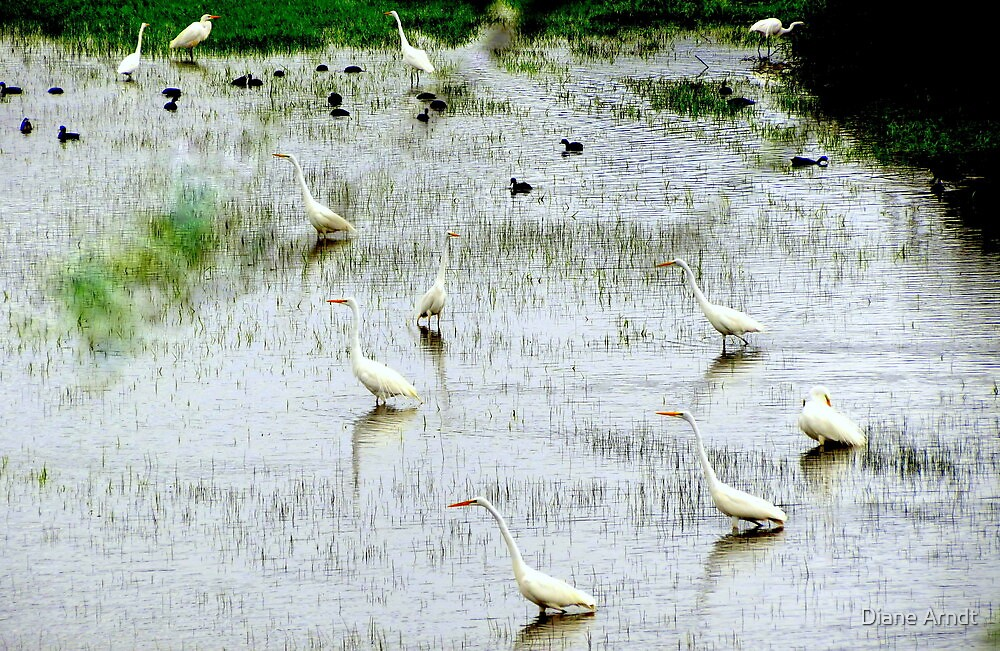 March Of The Egret's... Coquille, Oregon by Diane Arndt