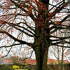 Prince Tree by silentstead