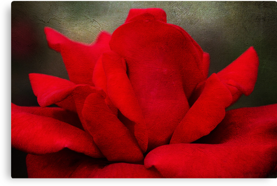Red Petals by Robyn Carter