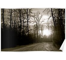 Trees in black and white Alberta Canada Poster