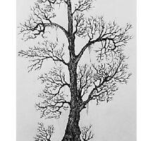 Tree Study by Adam R. King