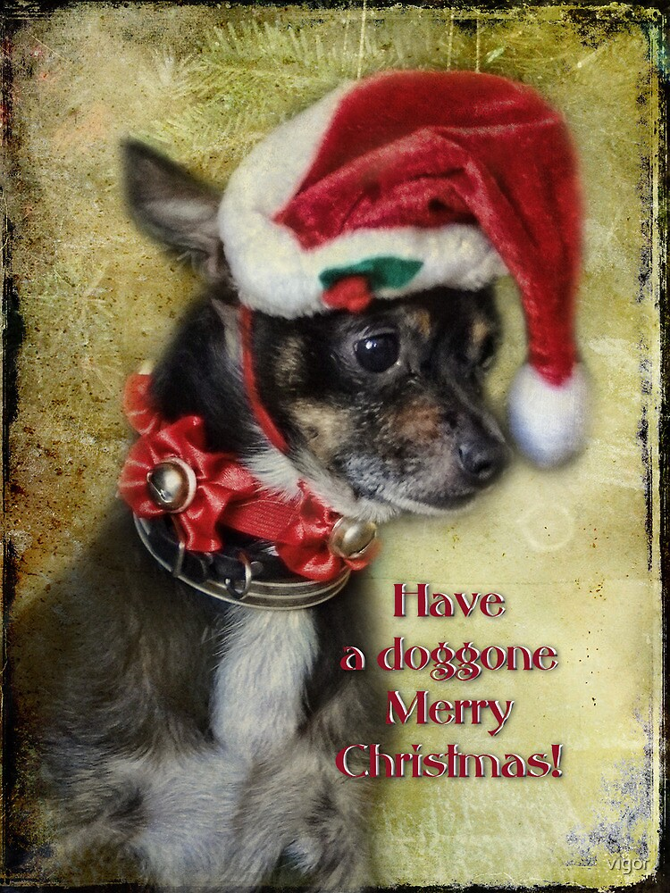Have a Doggone Merry Christmas! by vigor
