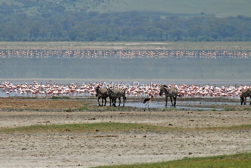 Ngorongoro Crater Wildlife, Tanzania, Africa by Adrian Paul
