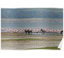 Ngorongoro Crater Wildlife, Tanzania, Africa Poster